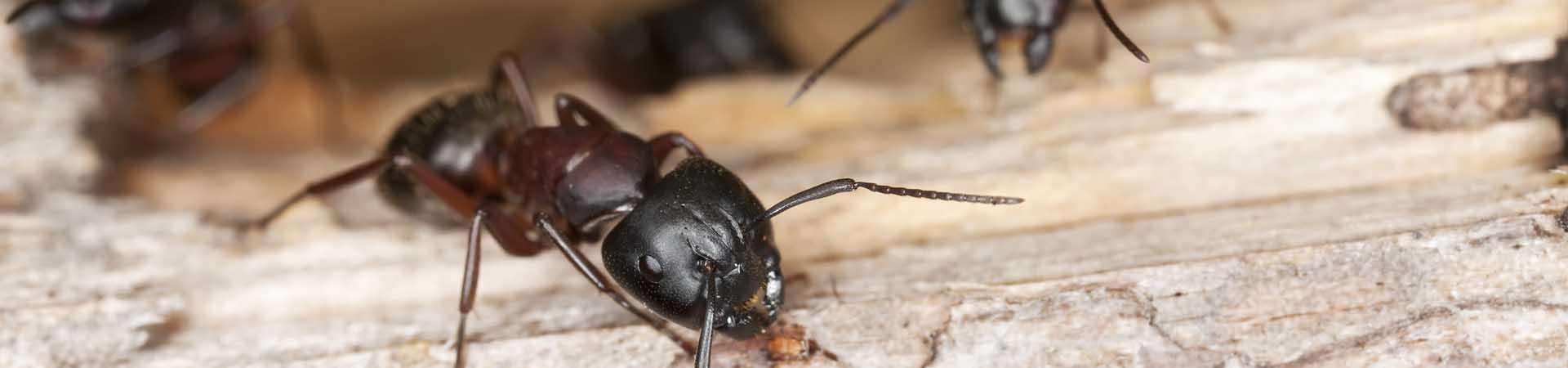 mainslide_ants_2