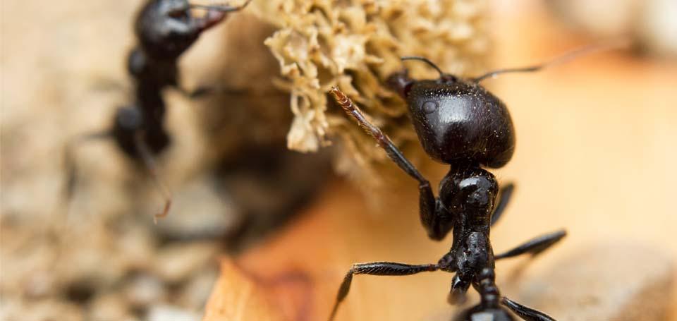 ants_1
