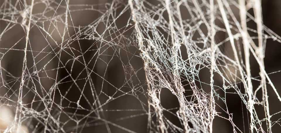 bodytext_spiders9