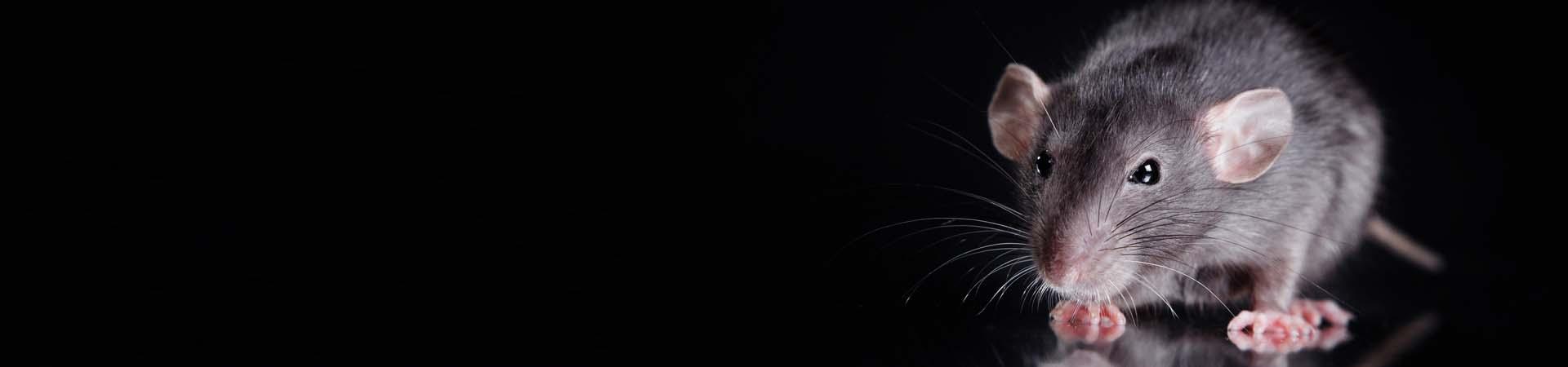 1920w-450h-slider-rodents1