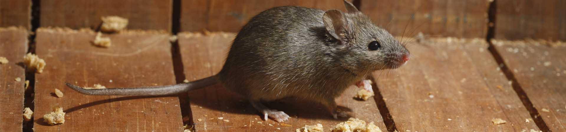 1920w-450h-slider-rodents2