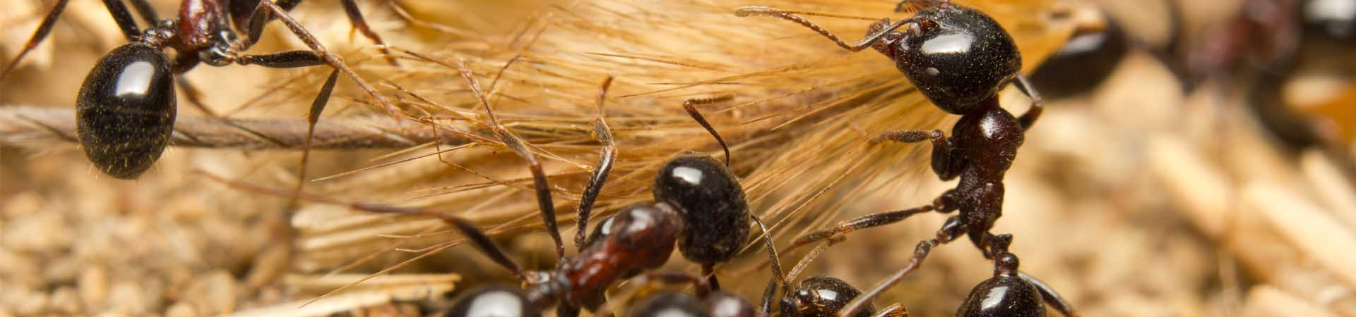 mainslide_ants_1