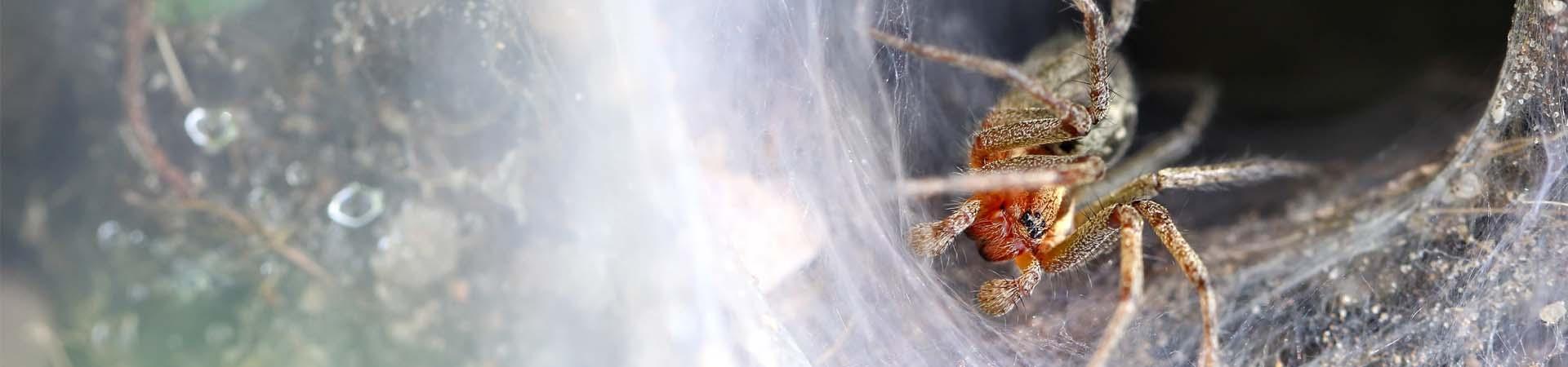 mainslide_spiders1